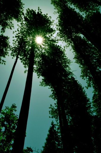 Ahwahnee Sunshine