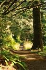 Quiet walk... North Ridge Trail