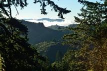 North Ridge Trail, Purisima Creek Redwoods