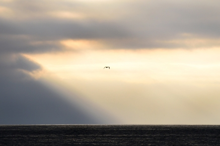 Gull in flight, Rockaway Beach, Pacifica, CA