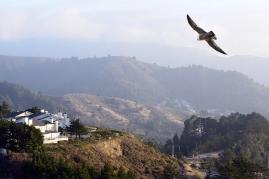 Pacifica, CA, from Malagra Ridge Open Space