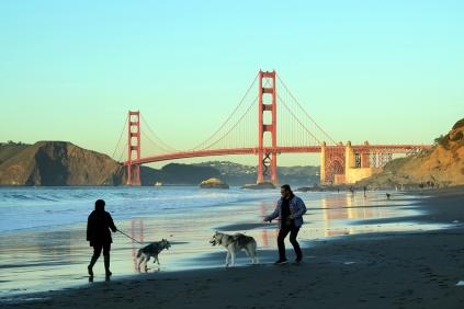 Dogs love the beach