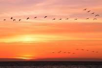 20170924-pelicanSunset-DSN_4259_s1600
