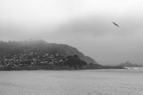 20180701-Pacifica-DSN_6998_BW_s1600_3x2